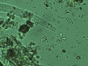Masterclass Bodemleven onder de Microscoop